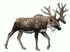 Stag-moose Cervalces scotti extinct | Stag Moose-Cervalces scotti photo CervalcesStagMoose.jpg