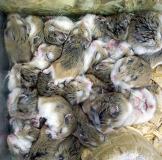 cute hamster babies    Like, share http://www.celebritybabyclothes.com/