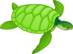 Green Sea Turtle clip art - vector clip art online, royalty free & public domain