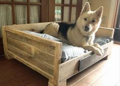 diy dog beds for large dogs