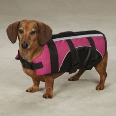 Guardian Gear Brite Pet Preserver Life Jacket - Raspberry *** You can find more details by visiting the image link. (This is an affiliate link and I receive a commission for the sales)