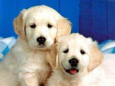 chien - Lilo