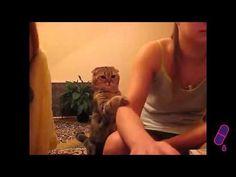 Romanii mai au si  Talent - De la Romani Adunate ! : Cele mai tari Faze comice - Cu pisici !  :))) Leși... Romania