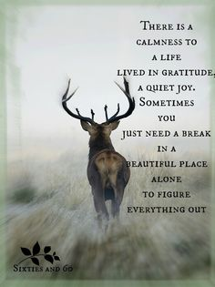 *There is a calmness to a life lived in gratitude. A quiet joy. Sometimes you just need a break in a beautiful place alone to figure everything out...