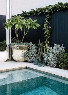 Backyard Pool Designs, Small Backyard Design, Small Backyard Pools, Swimming Pools Backyard, Garden Pool, Outdoor Pool, Backyard Landscaping, Outdoor Gardens, Backyard Ideas