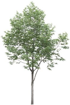 Ideas For Tree Photoshop Png Nature