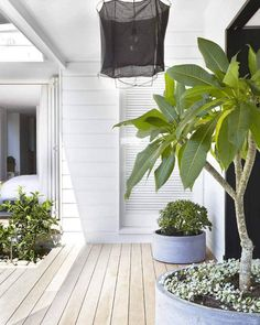 There's something refreshingly cool about this Sydney house. It's whitest of white interiors bo...