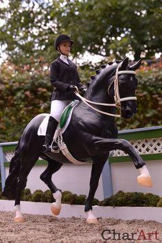 Dressage model horse by Charlotte Pijnenburg