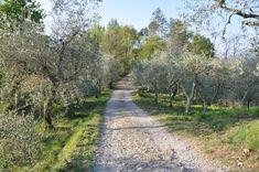 Anfahrt zu La Gioiella Country Roads, Rural House, Nice Asses