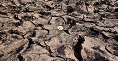 Ni el temporal de Atacama aliviará la sequía, y es más, se espera que para el 2050 el desierto llegue a la Región Metropolitana. Entonces ¿cómo se soluciona?