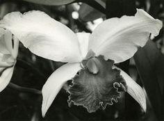 albert renger-patzsch | Albert Renger-Patzsch (1897-1966)