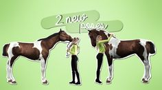 "blueberryfieldseq: "" Two new poses! Download •  Use alt to move around your sim/horse • Do NOT reupload as your own • The poses have been tested on an American Quarter Horse Check out my facebook (in progress) Pose names (for those without a..."