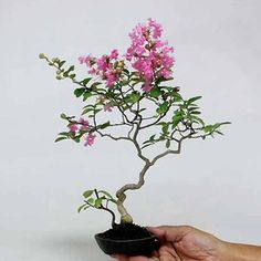 Bonsai mini hoa 07