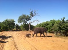 Elephants Chobe Botswana Africa