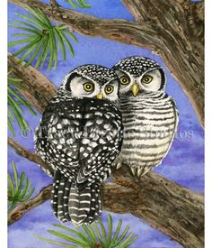 Here's a watercolor painting of two Hawk Owls by Tracy Lizotte. To see how this painting was made visit: http://tracylizottestudios.com/index.php/post/103-the-making-of-owl-tree