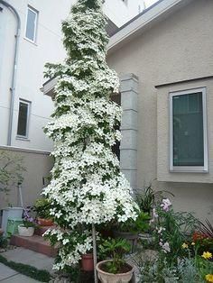 Garden Trees, Garden Furniture, Outdoor Structures, Holiday Decor, Green, Flowers, Plants, Interior, Outdoor Garden Furniture