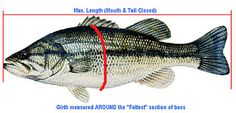 Bass Fishing Tip: Estimating Bass Weights Using Length & Girth | Bass Fishing Tips & Tactics