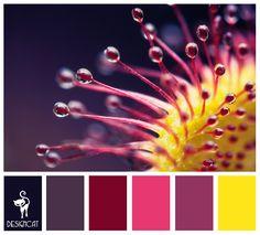 Plum & Yellow - Purple, Blue, Mauve, Plum, Cerise, Pink, Yellow - Colour Inspiration Pallet