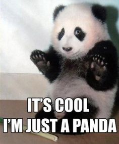 Pandas are awesome.