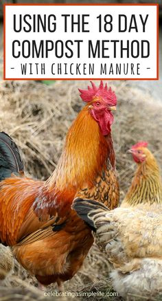 HOW TO COMPOST CHICKEN MANURE - IN JUST 18 DAYS How to compost chicken manure the very fastest way, using the hot compost method. Just 18 days and this method with have your chicken manure fully composted and ready for gardening. Portable Chicken Coop, Chicken Coop Plans, Building A Chicken Coop, Diy Chicken Coop, Clean Chicken, Chicken Pen, Chicken Lady, Chicken Ideas, Fried Chicken