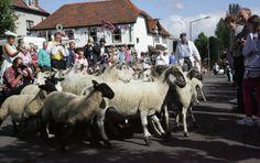 Overton sheep fair 2012