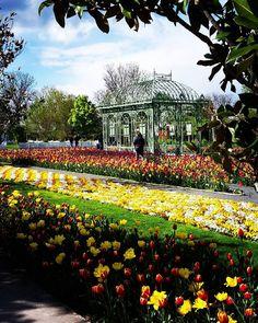 Taucht ein in die Farbenpracht der Blumengärten Hirschstetten Flora, Vienna, Vineyard, Dolores Park, Walking, Travel, Outdoor, Flowers Garden, Outdoors