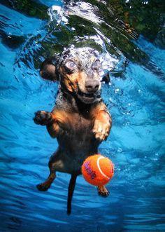 12 pics van derpy honden die onderwater een bal proberen te vangen | Flabber