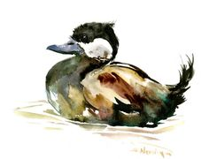 Ruddy Duck, original watercolor painting, ducks, duck art, duck painting by ORIGINALONLY on Etsy