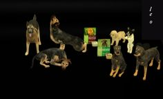 DECO DOGS at Leo Sims via Sims 4 Updates Check more at http://sims4updates.net/objects/decor/deco-dogs-at-leo-sims/