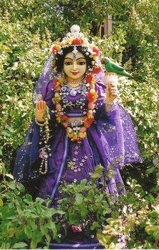 Sri Tulsi Devi- The beautiful Goddess who oversees the plants and creepers of the Spiritual abode and who is the coordinator of all beautiful arrangements for Sri Sri Radha Krishna