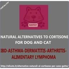 Cortisone dogs cats