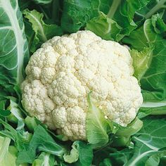 Snowball Cauliflower - ORGANIC - Heirloom Vegetable - 100 Seeds
