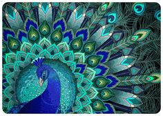 Peacock scarf in cotton voile Hand painted in Aquas by Shovava, $68.00