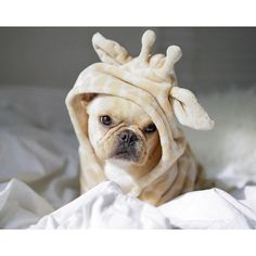 we think every dog should have one of these blankets!