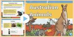 Use this powerpoint to find out some fantastic information about animals that live in Australia. Scientific Writing, Different Types Of Animals, Animals Information, Display Banners, Report Writing, Anzac Day, Tasmanian Devil, Echidna, Australian Animals