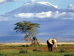 Monte Kilimanjaro, Tanzânia my daddy climbed this back in 2000 Monte Kilimanjaro, Kilimanjaro Climb, Wild Life, Photo Elephant, Bull Elephant, Pictures Of The Week, Famous Landmarks, African Safari, African Elephant