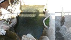 Saitabat -Alabalik havuzu...