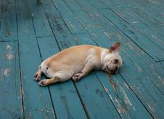 Pin By Mirko Greco On Foto Divertenti Pinterest - 20 adorable puppies that will pretty much sleep anywhere
