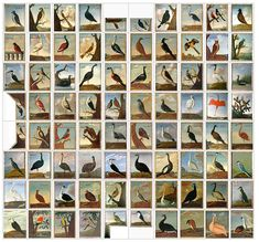 Birds from Brasil -- A special century painted ceiling by Albert Eckhout. -- Hoflössnitz in the East of Germany Family History Book, World History Lessons, Albert Eckhout, Scenic Wallpaper, Fresco, Ceiling Murals, Dream Pictures, Fairytale Fantasies, Antique Paint