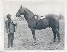 Man O War in his later years.