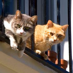 Cats+by+sailFree2209.deviantart.com+on+@DeviantArt