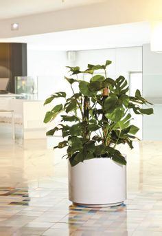 Steel Plus - You can personalize your Hydro.planter with your corporate color with Hobby Flower