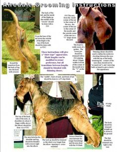 dog care,dog ear cleaner,dog grooming tips,dog nail trimming Dog Grooming Styles, Dog Grooming Tips, Grooming Salon, Airedale Terrier, Welsh Terrier, Yorkshire Terrier, Dog Ear Cleaner, English Bulldog Puppies, Wire Fox Terrier