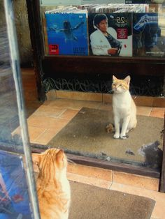 I'm starting with the cat in the mirror. I'm asking him to change his ways.    His Ways. Hahaha!!