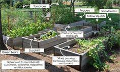 My Vegetable Garden 2011