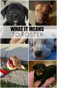 What It Means To Foster Dogs