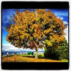 Fall colours at Crescent Beach, #SurreyBC