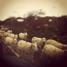 Rush hour on the Isle of White