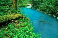 Costa Rica's Turquoise River - A Natural Optical Illusion - http://www.odditycentral.com/travel/costa-ricas-turquoise-river-a-natural-optical-illusion.html