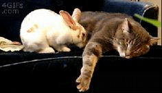 MOVE OVER, KITTENS, BUNNIES ARE COMING! | 21 Reasons Why Bunnies Are Actually The Best Pets